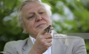 LONDON - MAY 02: Sir David Attenborough launches National Moth Recording Scheme at London Zoo on May 2, 2007 in London. The scheme is run by Butterfly Conversation, funded by a grant of 806,000GBP from the Heritage Lottery Fund. Thousands of volunteers will be enlisted over the next four years to help record the moth population in the Britain. (Photo by Gareth Cattermole/Getty Images)